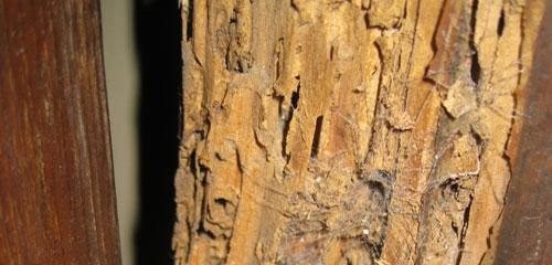 C mo atacan la madera las termitas - Termitas en casa como matarlas ...