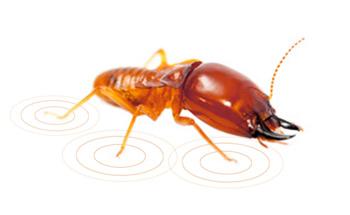 deteccion peligro termitas