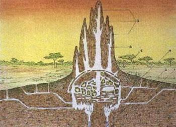 arquirtectura-termitero