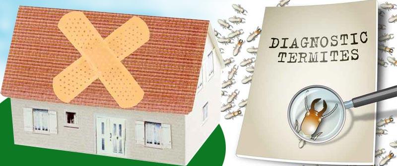 Remedios caseros para eliminar termitas - Remedios caseros para eliminar hormigas en casa ...